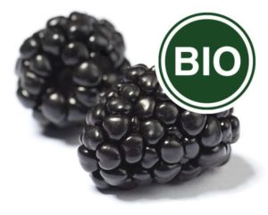 Blackberry Bio
