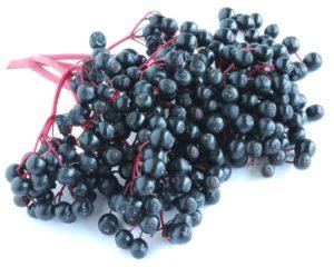 Owoc czarnego bzu