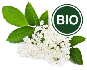 Holunderblüte Bio