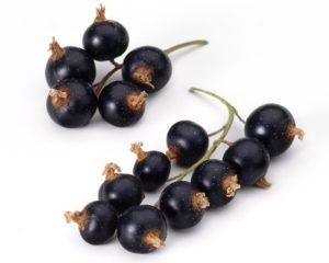 Johannisbeere schwarz