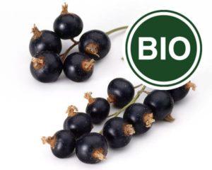 Johannisbeere schwarz Bio