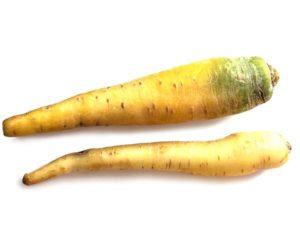 Marchew żółta